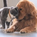 Image of a friendly dog and cat